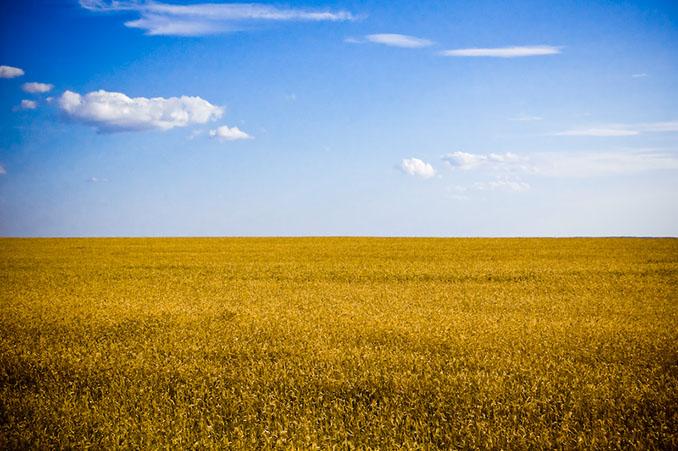 Die Farben der Ukraine sind blau und gelb, doch dieses Feld weht unter anderer Flagge © Ilya (CC BY-SA 2.0)