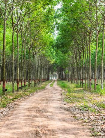 Kürzlich gepflanzte Bäume zieren einen Weg © boonsom (iStock / thinkstock)
