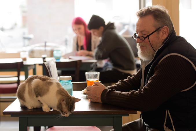 So eine Katze gibt eine prima Begleitung ab © evangelischer Pressedienst