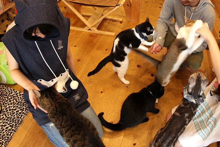 Der neue Katzenhoodie aus Japan