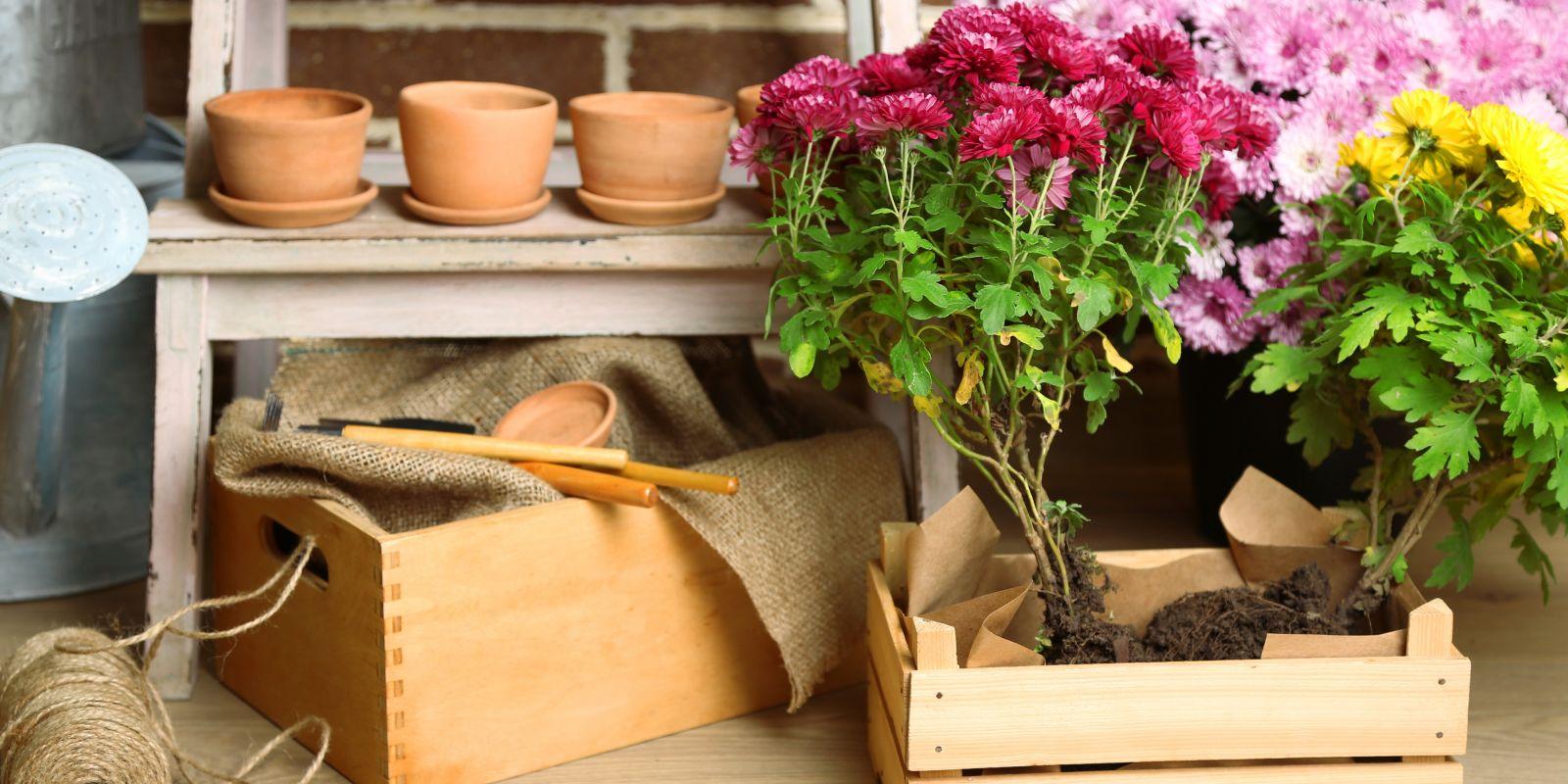 Nachhaltigkeit im Garten und auf dem Balkon: umweltfreundliche Pflanzenkübel