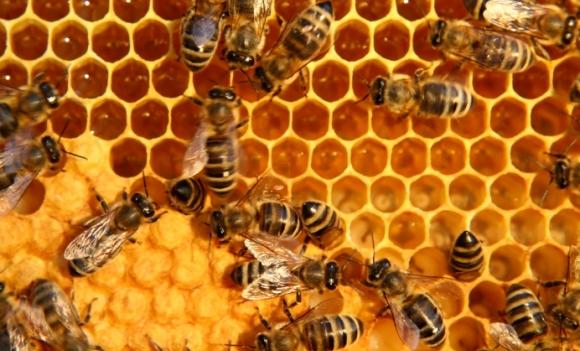 Einfache Formel: Verschwinden die Bienen, verschwindet der Mensch