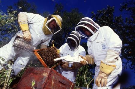 Bienensterben durch Varroamilbe: Menschheit ernsthaft in Gefahr
