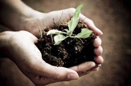 WWF warnt: Kunstdünger forciert Nahrungsmittelknappheit in Entwicklungsländern