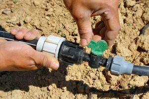 Nachhaltige Bio-Landwirtschaft in Saudi-Arabien spart nachhaltig Wasser.