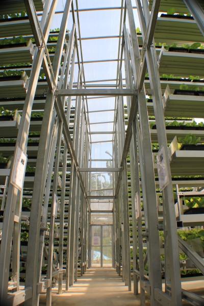 Vertical Gardening: Neue vertikale Farm in Singapur zeigt Möglichkeiten
