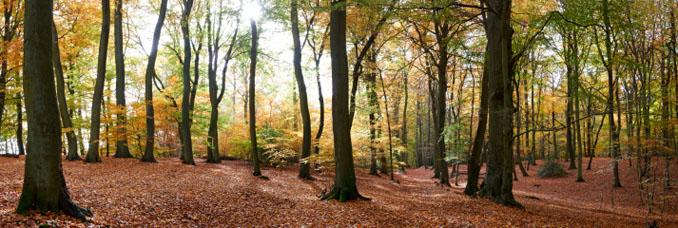 Lichtblicke bei der Aufforstung der deutschen Wälder - Es wird mehr angebaut, als abgeholz ©iStockphoto