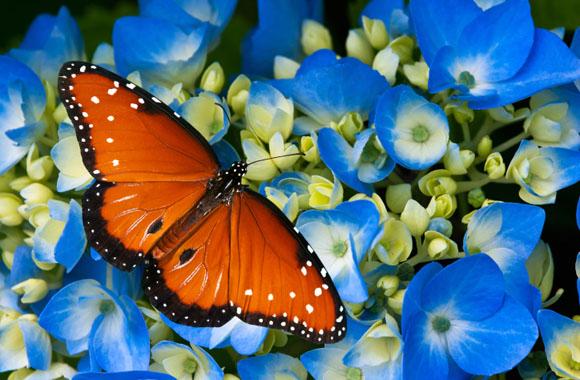 Klimawandel: Der Schmetterling gewinnt