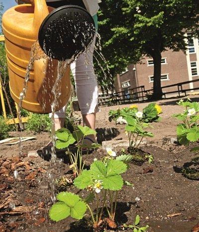 Urban Gardening in der Schule
