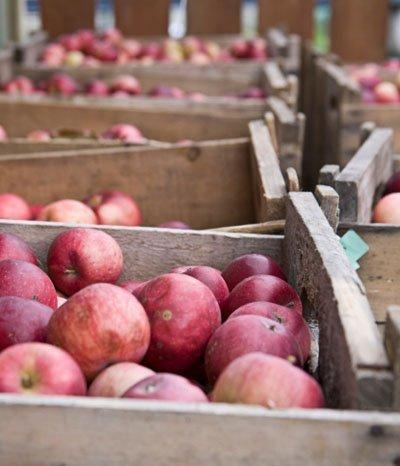 Apfel richtig einlagern