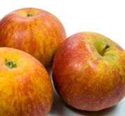 Alte Apfelsorten Cox Orange
