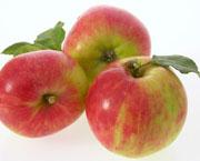 Apfelsorte Gravensteiner