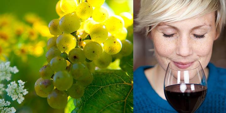 Weingenuss aus reicher Biodiversität