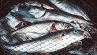 Was bedeutet eigentlich Bio Fisch?