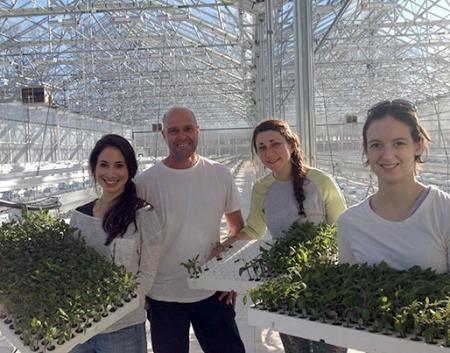 Urban Gardening auf dem Supermarktdach: Brightfarms