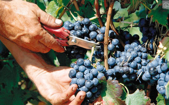 Aus den besten Weinregionen Europas kommen die Bio-Weine für den Probier-Service © Delinat