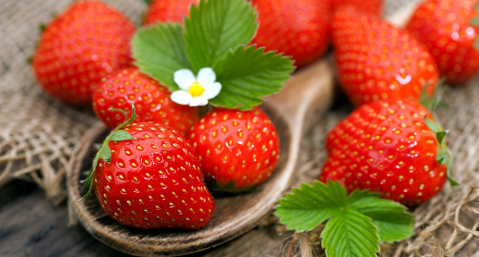 Erdbeeren Saison