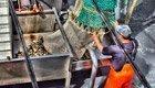 Beruhigt Fisch essen: MSC-Siegel informiert über nachhaltigen Fang