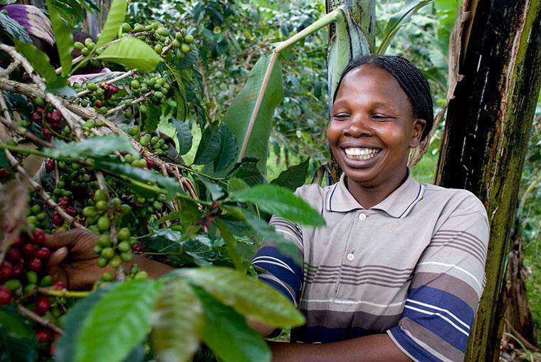 Oliva Kishero von der Kooperation Gumutindo beim Pflücken