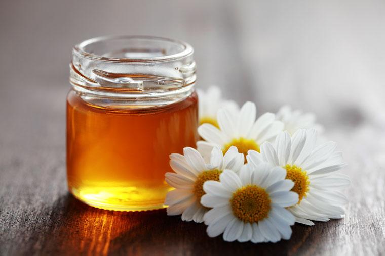 Gänseblümchen Honig