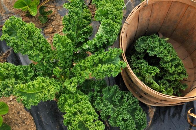 Gemüse macht fit Spinat