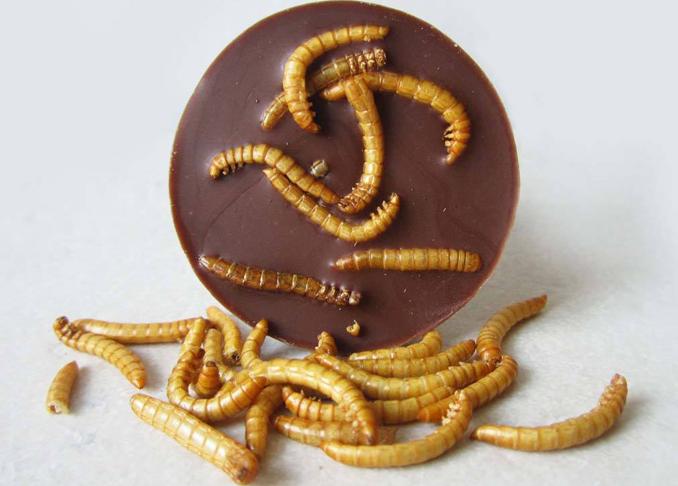 Insekten essen gegen Welthunger