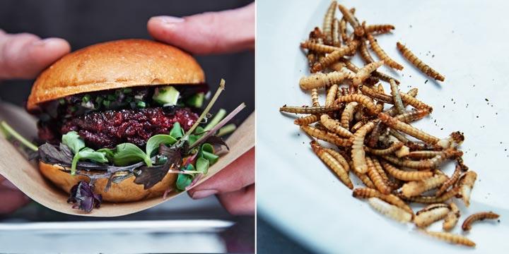 Insekten - das Fastfood Menü der Zukunft
