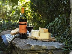 Wein schmeckt besser dank Biodiversität. © Delinat