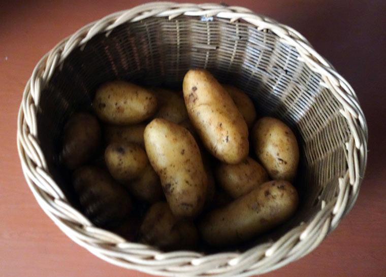 Kartoffeln kühl und dunkel lagern