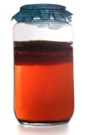 Kombucha erfrischt, ist gesund und lässt sich einfach selber herstellen.