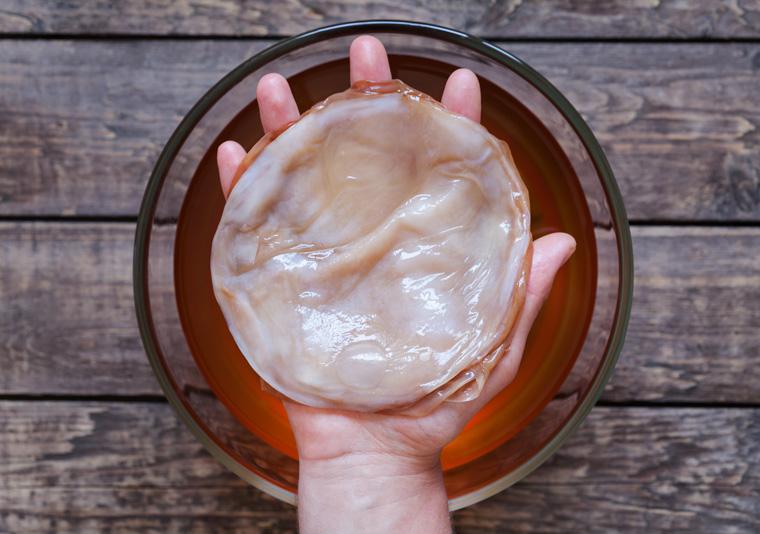 Der Kombucha-Teeplilz entwickelt durch den Fermentationsprozess eine Vielzahl an Hefekulturen und Bakterienstämme.