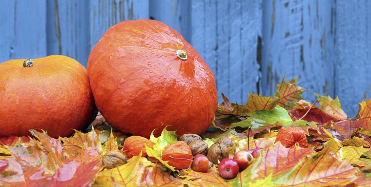 Im Herbst ist es endlich so weit Kürbisse sind wieder in Hülle und Fülle da