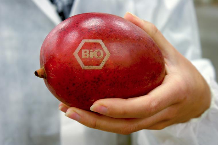 Bio Lichtlabel auf Mango.