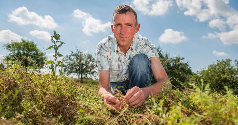 Bio-Bauer Anton Scheidel baut grüne Linsen in Hohenlohe an
