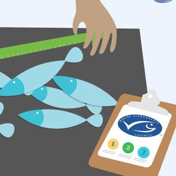 Island erhält MSC Siegel für Fischerei