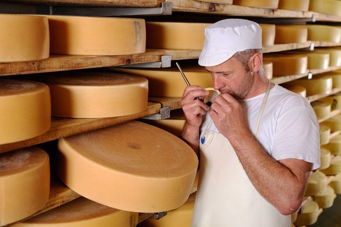Mitarbeiter der Molkerei Sellthüren kontrolliert den Käse