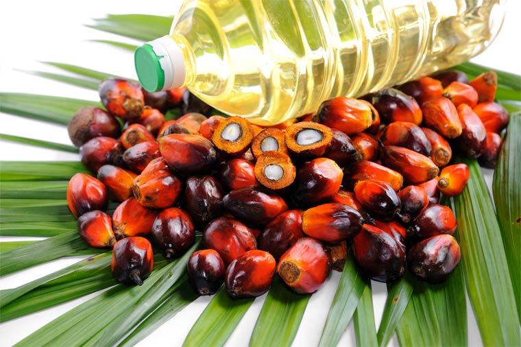 Palmöl in Produkten: Müsli, Margarine oder Nuss Nougat Creme über Wurstwaren