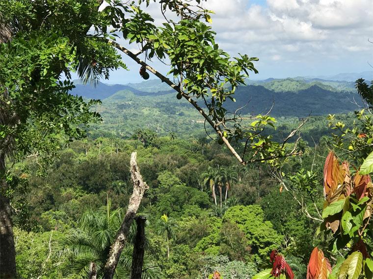 Peru Kakaopflanzen