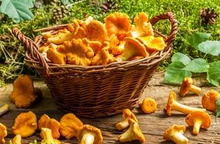 6 Ernährungsmythen rund um Pilze