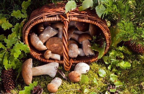 pilze sammeln und frisch zubereiten tipps und rezeptvorschl ge. Black Bedroom Furniture Sets. Home Design Ideas