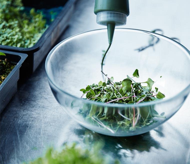 LOKAL Salad (Salat aus Hydrokulturen)