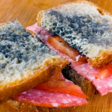 So kannst du Lebensmittel vor Schimmelpilzen schützen