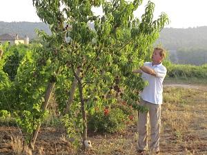 Sekundärkulturen - Im Weinberg wachsen nicht nur Reben, sondern auch Pfirsische. © Delinat