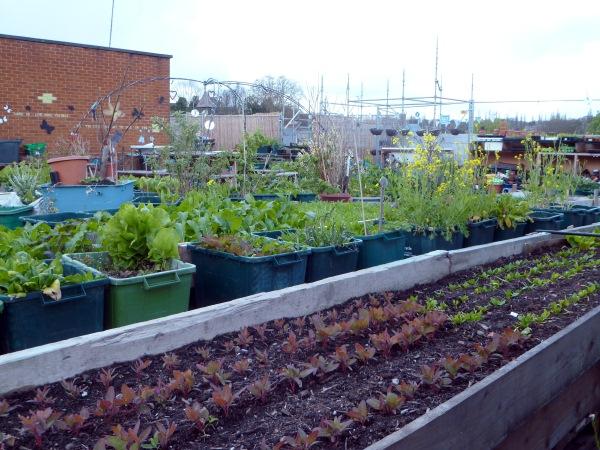 Food from the Sky: Urban Farming vom Dach in den Supermarkt