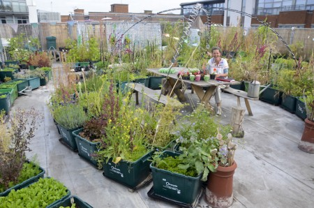 Food from the Sky: Urban Gardening vom Dach in den Supermarkt