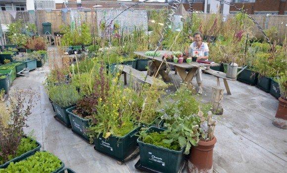 Weltweit einmalig: Himmlisch frisches Gemüse vom Dach in die Theke