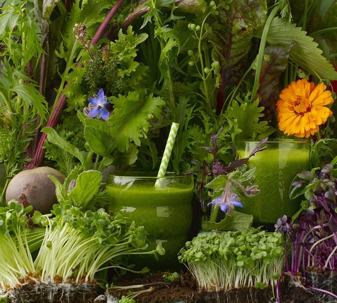 Grüne Smoothies Vegan Rohkost