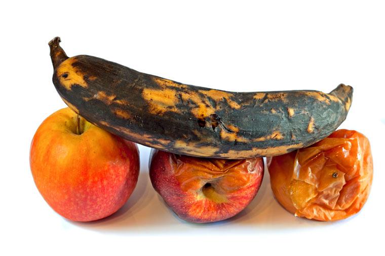 Verfaultes Obst lockt Fruchtfliegen an