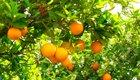 Zitrusfrüchte, kleine Vitaminbomben im Winter