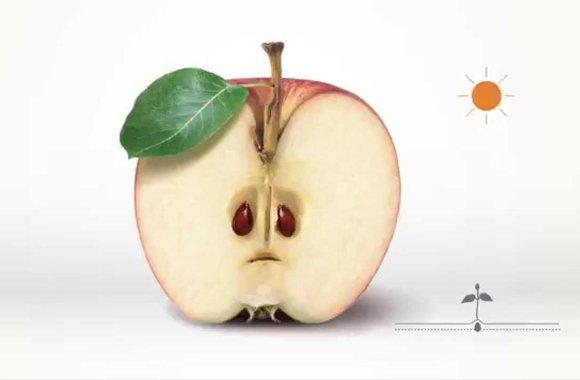 Wer Äpfel wegwirft, verschärft den Klimawandel